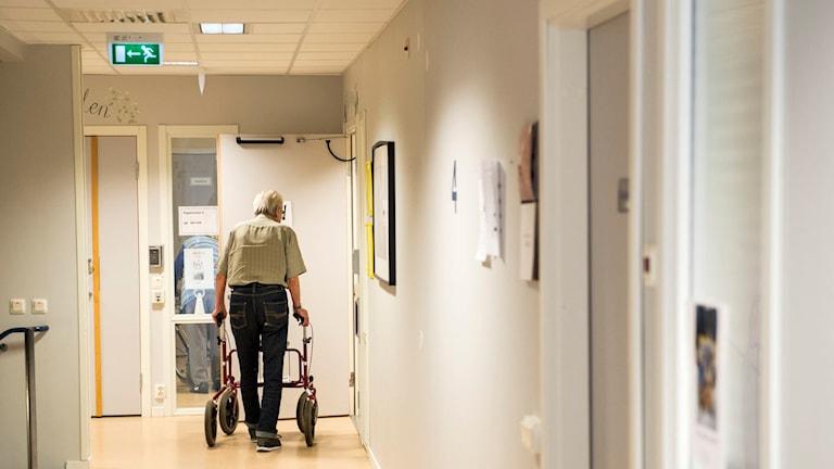 Man med rullator i korridoren på ett äldreboende. Foto: Pontus Lundahl/TT