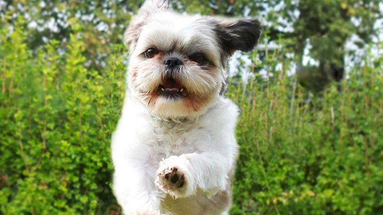 Hunden Molly försvann under nyårsafton.
