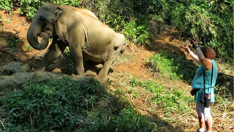 Ann Ahlberg och en av elefanterna hon har hjälpt i Thailand. Foto: Privat