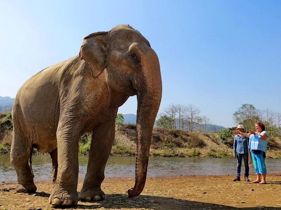 Ann Ahlgren och en av de elefanter som hon kommunicerat med. Foto: Privat