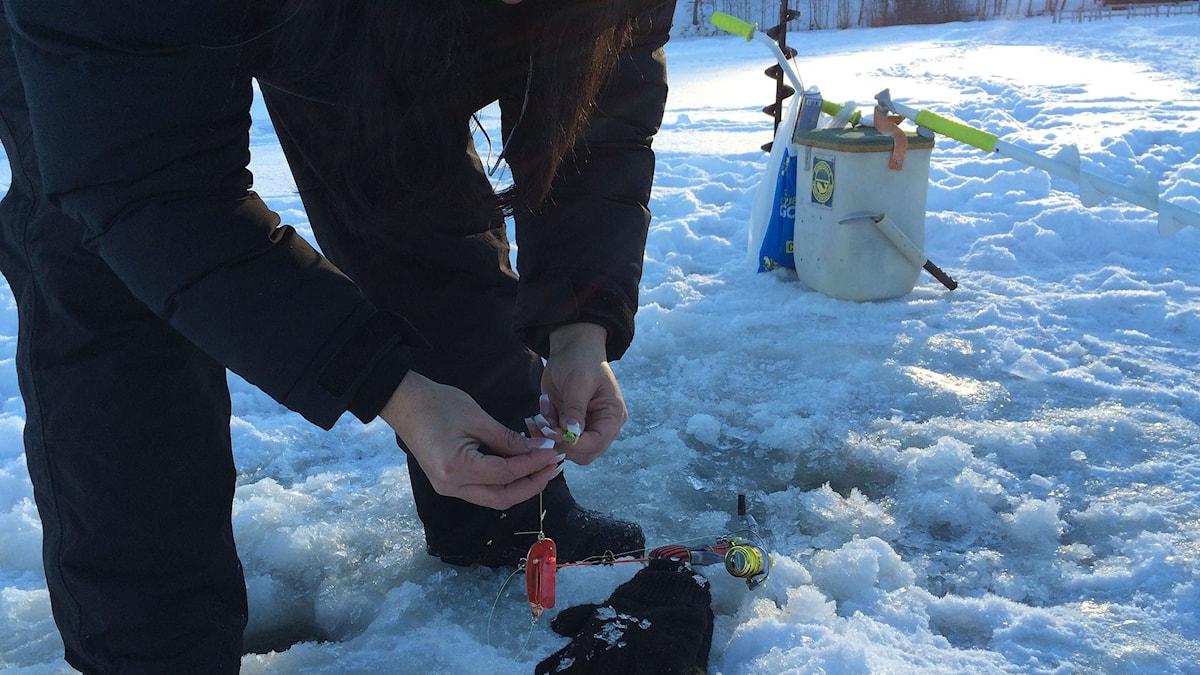 Förbereder pimpelfiske på Sidsjön. Foto: Niklas Axelsson/SR