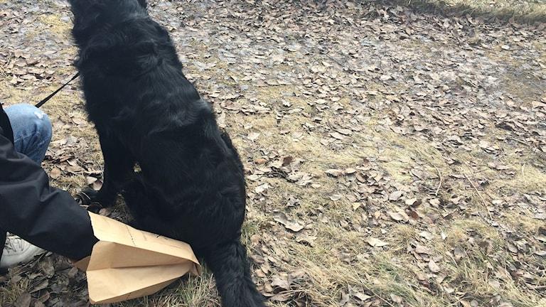 Pant på hundbajs om man använder kompostpåsen. Foto: Pether Öhlén/Sveriges Radio