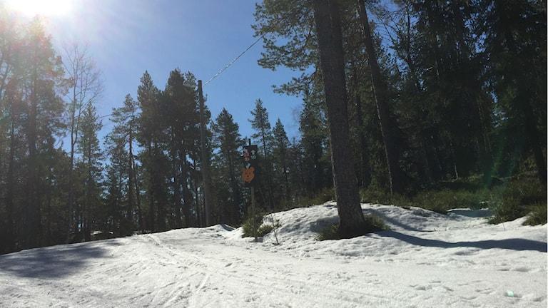 Skidspår på Södra Berget i Sundsvall. Foto: Niklas Axelsson/Sveriges Radio