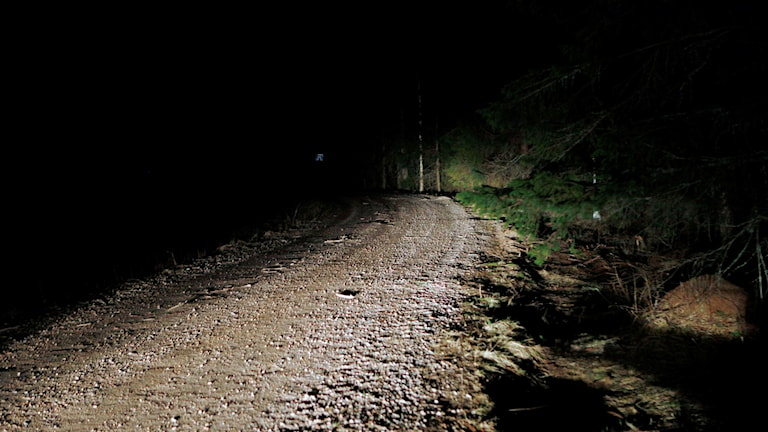 The murdered man was found dead on this path in the forest.