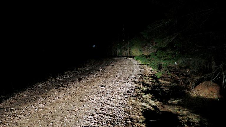Den döde mannen hittades på den här skogsvägen vid Maj söder om Sundsvall, enligt st.nu. Foto: Mats Andersson/TT