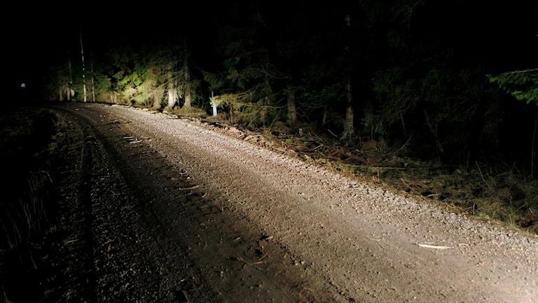 Den döda mannen hittades på den här skogsbilsvägen vid Maj söder om Sundsvall enligt st.nu. Foto: Mats Andersson/TT