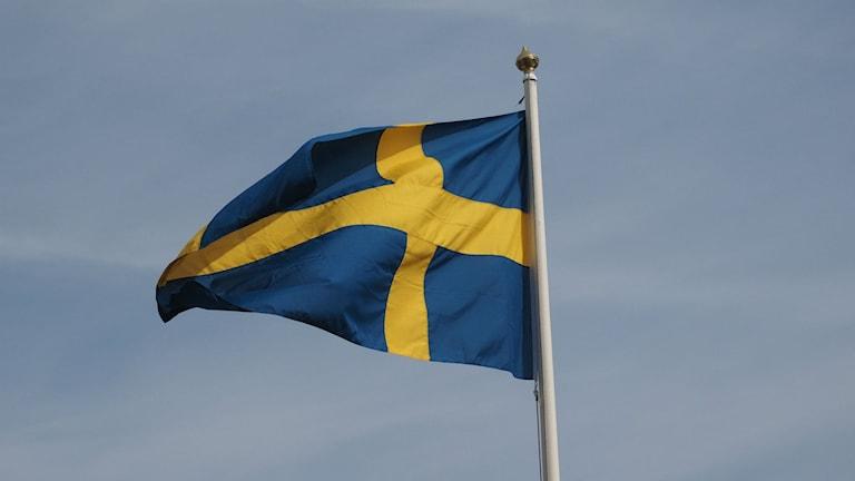 Svensk flagga vajar i vinden. Foto: Ingrid Engstedt Edfast/SR