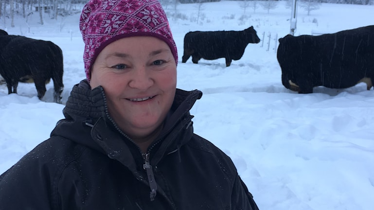 Anna Hultin står i kohagen som är snötäckt. Hon har en rosa mössa med vitt mönster och en tjock svart jacka. I bakgrunder ser man två kor och en tjur som går runt i hagen. Foto: Ingrid Engstedt Edfast/Sveriges Radio