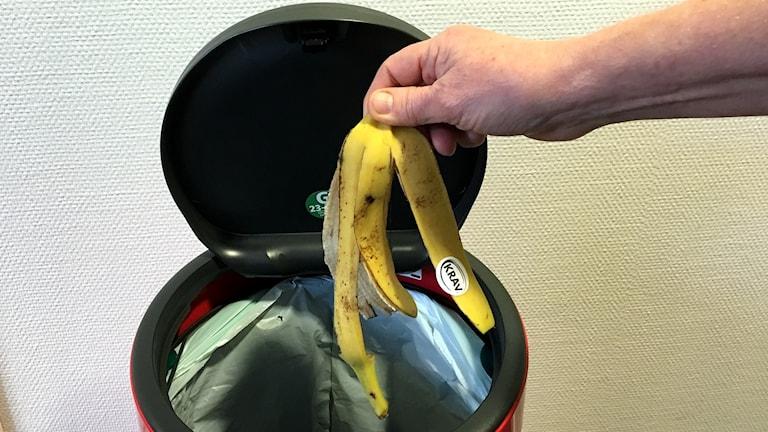 Ett bananskal är på väg att kastas ner i en papperskorg med öppet lock. Foto: Ann-Charlotte Carlsson/Sveriges Radio