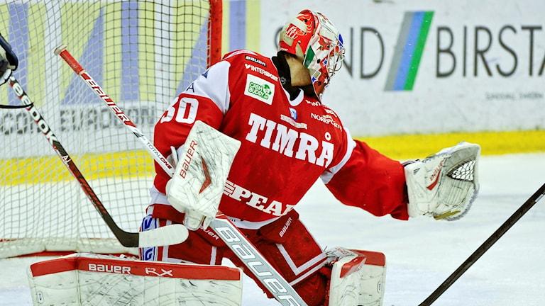Daniel Bellissimo, Målvakt Timrå (2013).