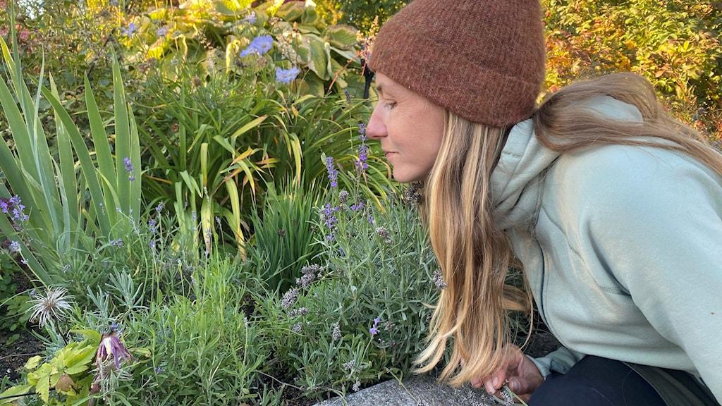 Kvinna med mössa luktar på blommor i rabatt
