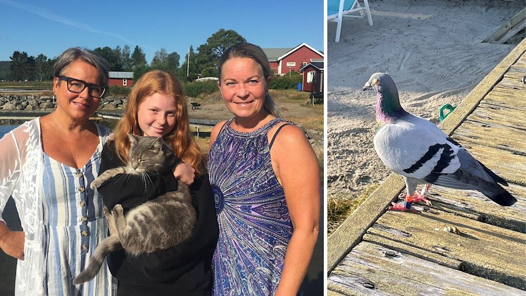 Ett montage av två bilder. Till vänster, två kvinnor och en flicka som står framför vattnet med en katt i famnen. Till höger en brevduva på samma brygga men vid ett annat tillfälle.