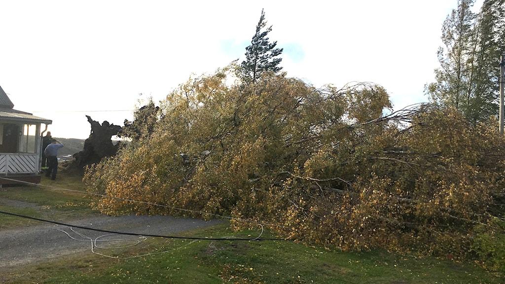 träd, faller, storm, hus