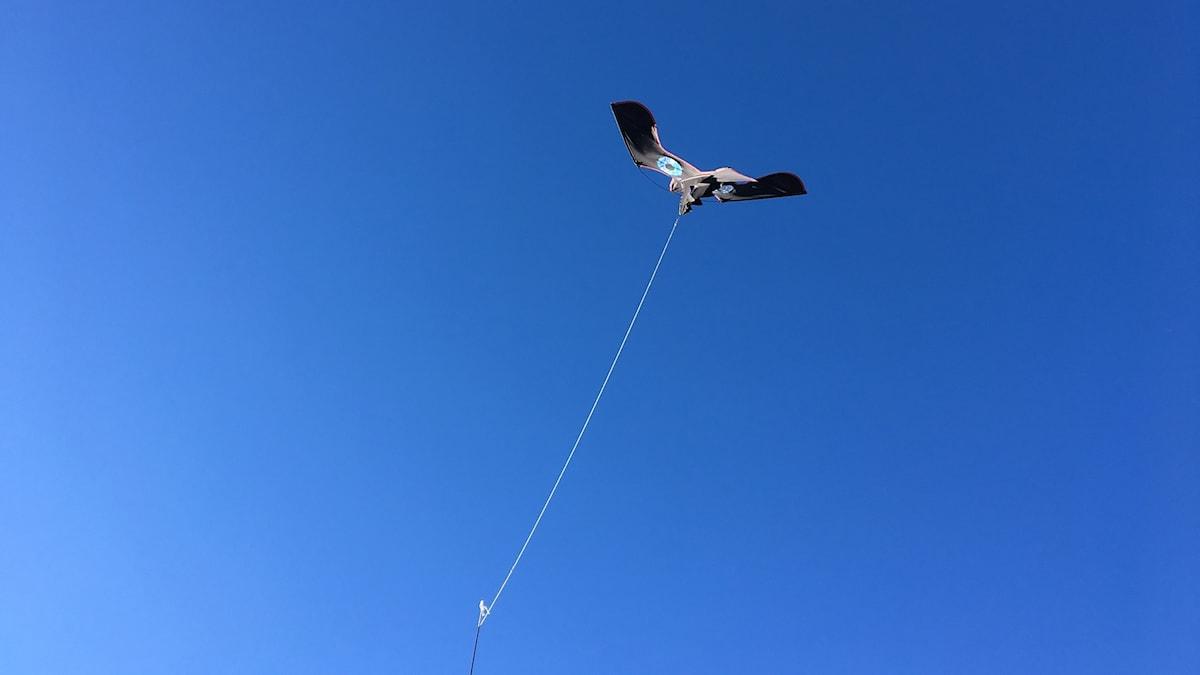 En fågelskrämma i form av en flygande örn sitter förankrad i en lina och flyger mot en klarblå himmel. Foto: Ann-Charlotte Carlsson/Sveriges Radio