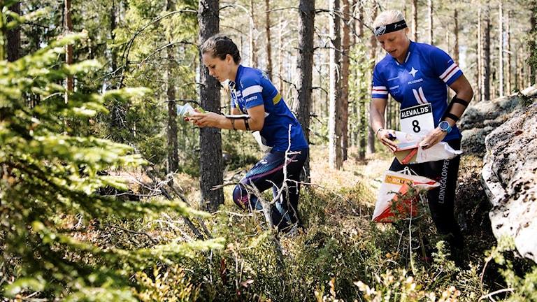 Deltagare på O-ringen i Örnsköldsvik och Höga Kusten är nöja med arrangemanget.