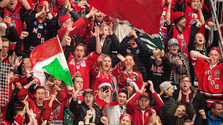 Modos fans jublar under matchen i hockeyallsvenskan. Foto: Nils Jakobsson / BILDBYRŁN