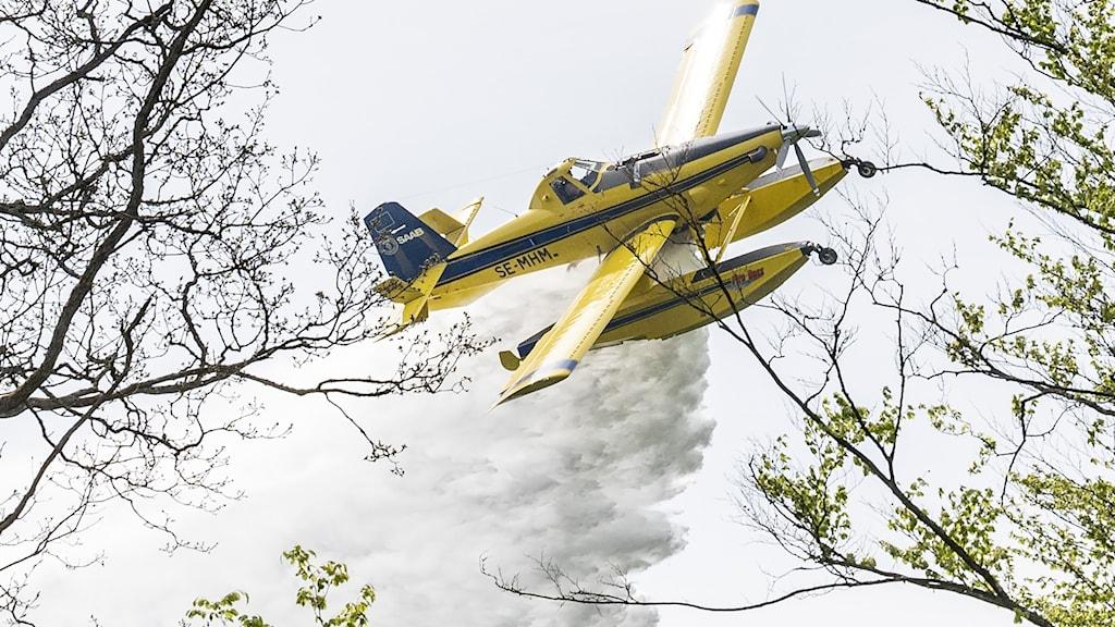 En Air Tractor AT-802 Fire Boss vattenbombar en lövskog under en brandövning. Foto: Johan Nilsson/TT