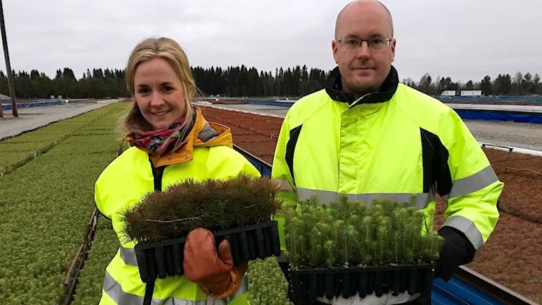 Matilda Lindmark, Mittuniversitetet, och Niklas Borg på Bogrundets plantskola