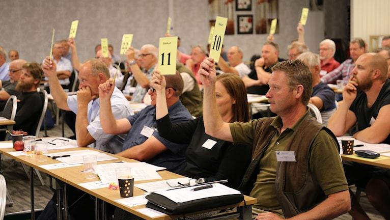 Människor som röstar och håller upp lappar
