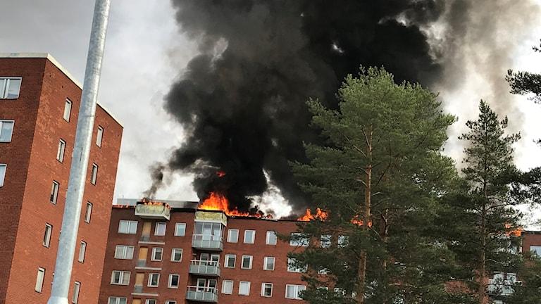 Kraftiga lågor och stor svart rökpelare bolmar ut från höghuset som brinner i Bredsand söder om Sundsvall. Foto: Alexander Arvidsson/Sveriges Radio