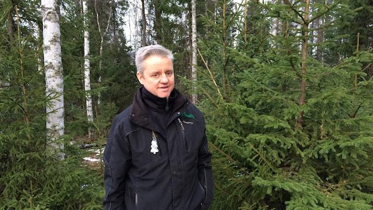 Skogsrådgivaren Fredrik Alenius står framför en gran på en av hans skogsmarker.