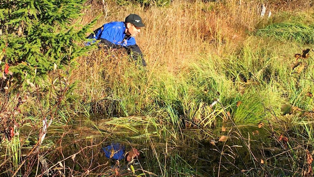 Per Sundin från Naturskyddsföreningen undersöker Remmarbäcken.