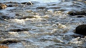 Högt vattenflöde i ett vattendrag. Foto: Staffan Almquist/TT