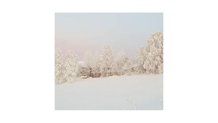 Alla nyanser i vitt. En röd stuga skymtar mellan de frostbeklädda träden. I förgrunden spår i nysnön. Foto:  Ernst Horneij/Lyssnarbild