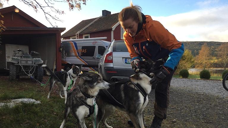 Ivriga hundar som vill ut och springa.