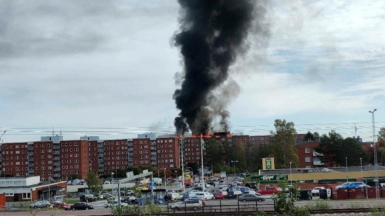 Stor svart rökpelare bolmar ut från höghuset som brinner i Bredsand söder om Sundsvall. Foto: Love Randberg/PRIVAT