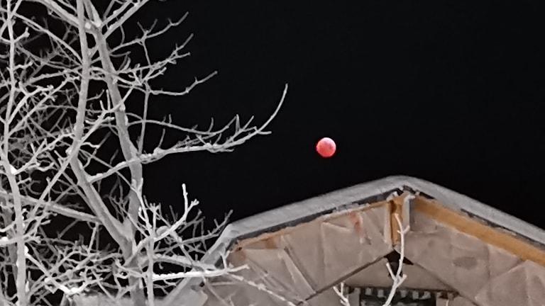 En mörkröd fullmåne, blodmåne, lyser över ett hustak. I förgrunden vita trädgrenar fulla med frost. Foto: Linda Lundh/PRIVAT
