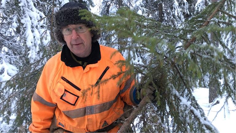 Uno Sjöberg har precis huggit sig en julgran