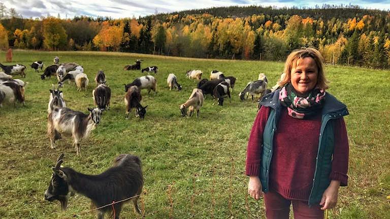 Christina Åström står bredvid en av gårdens lägdor där getterna betar. Foto: Alexander Arvidsson/Sveriges Radio
