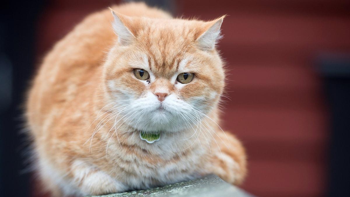 Förbjudet att överge katter
