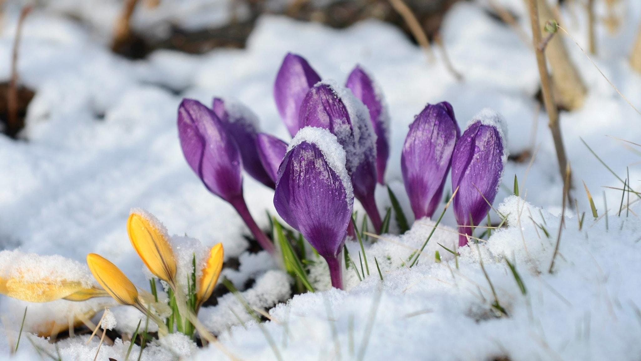 Kevät on myöhässä kertoivat Sisutarinoiden kuuntelijat