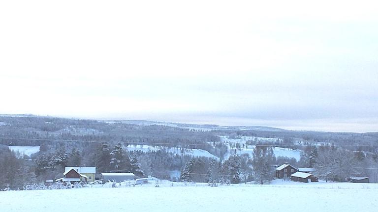 Hus i vintriga Reselebygden. Foto: Peter Hansson/Sveriges Radio