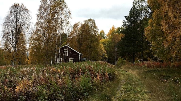 En gräsremsa är klippt fram till det övergivna huset i Graningen. Foto: Anton Kårén/Sveriges Radio