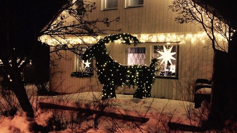 På en snötäckt altan står Victor Aronssons två meter höga julbock. Den är klädd i granris och invirad i 60 meter ljusslinga som gör att bocken synds även när det är mörkt. Bakom bocken ser man Victors hus som är vitt och även det pyntat med ljusslinga samt stjärnor i fönstren. Foto: Alexander Arvidsson/Sveriges Radio