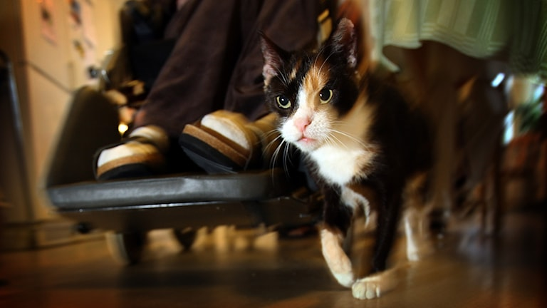 En katt går intill en rullstol.