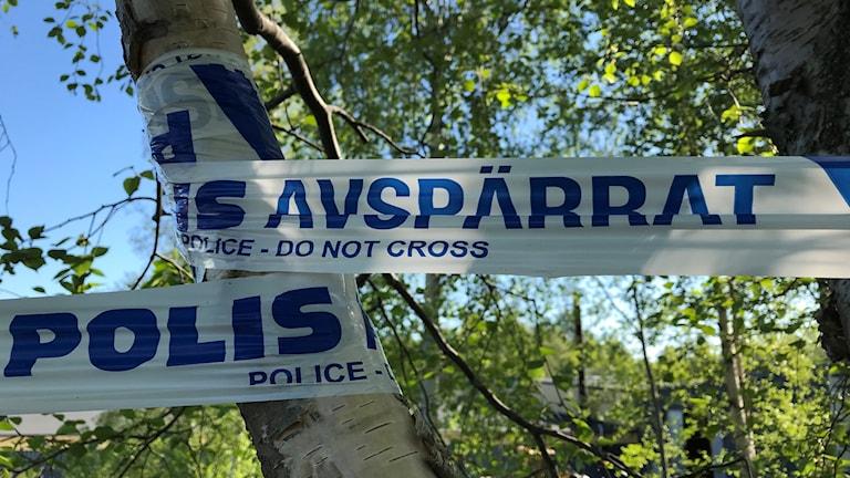 """Ett avspärrningsband från Polisen sitter fastsurrat i ett träd. Bandet har blå text med vit bakgrund. På bandet står det """"Polis, avspärrat"""" och under det står """"Do not cross"""". I bakgrunden lyser solen mellan björklöven. Foto: Alexander Arvidsson/Sveriges Radio"""