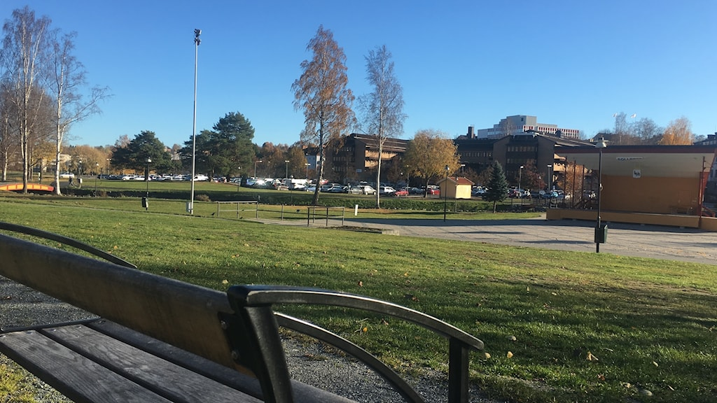 Bild över Sollefteå stadspark.