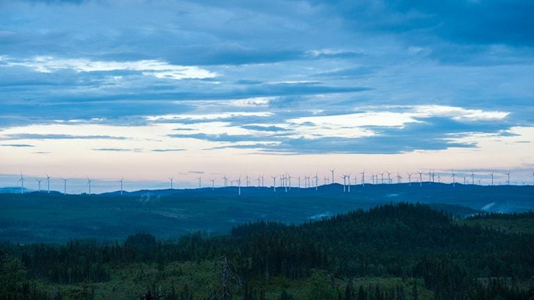 Vindkraftverken står på rad i vindparken på Björkhöjden i Västernorrland. Foto: Anders Nilsson