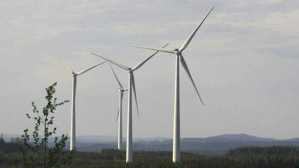 Vindkraftverk mellan Ramsele och Hammerdal.