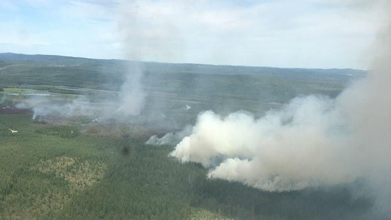 Brand i skogen vid Helgum utanför Sollefteå.