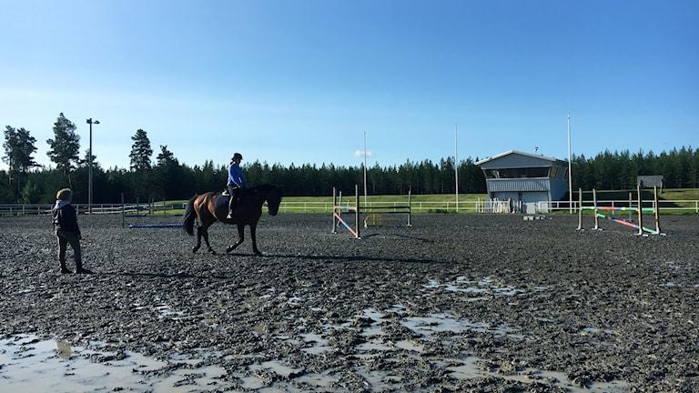 Ryttare på häst i en paddock.
