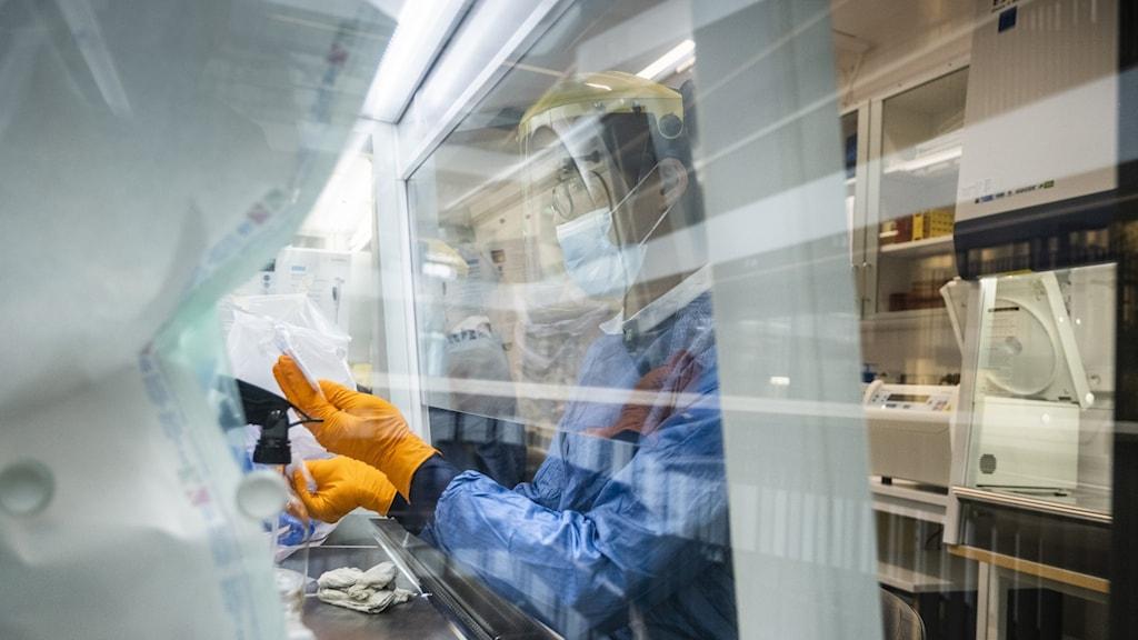 Nyinkomna prover tvättas och kontrolleras på labb som analyserar covid-19 prover.  Foto: Magnus Hjalmarson Neideman/SvD/TT