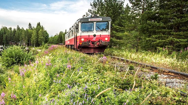 Ett diesellok på Inlandsbanan, en sommardag.  Den cirka 130 mil långa järnvägen går från Kristinehamn i söder till Gällivare i norr, genom Dalarna. Genom att bygga om dieselloken till vätgasdrivna lok och samtidigt ta över godstrafik från väg och andra järnvägar, kan Inlandsbanan bidra med klimatomställningen i Sverige, det anser vd Peter Ekholm på Inlandsbanan.