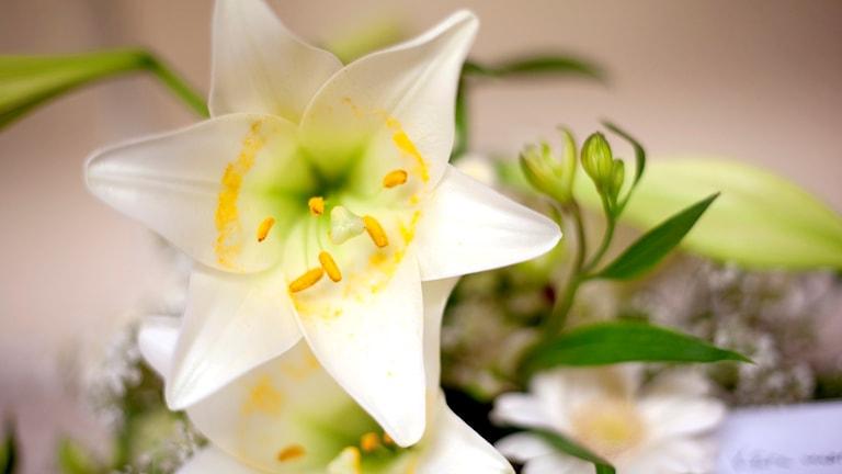 En bukett med vita liljor på en begravningsbyå. Foto: Björn Larsson Rosvall/TT