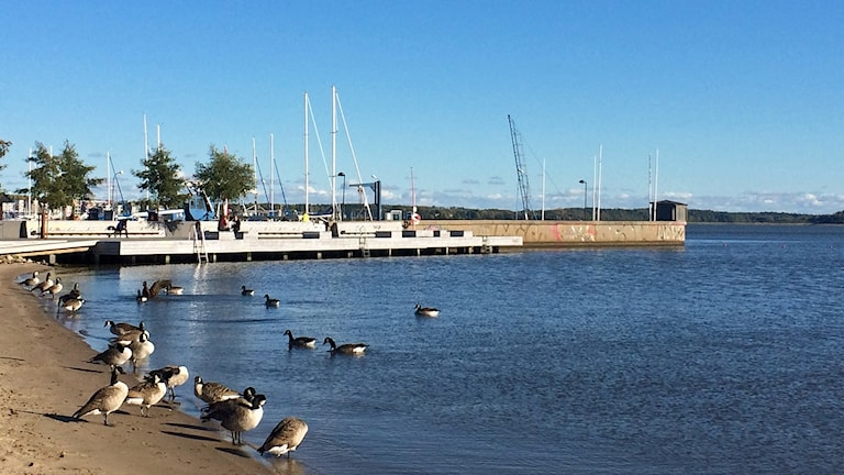 Löga strand i Västerås.