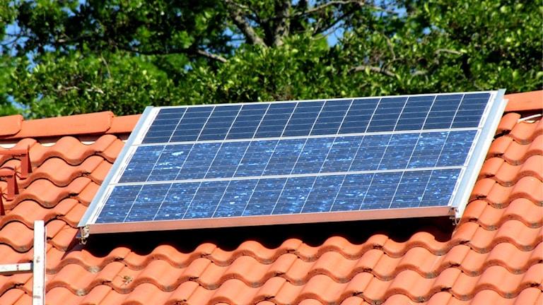 Solceller på ett hustak. Foto: Ida Nilsson/SR Västmanland